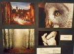 Rotary Young Photographer Competition - The prizewinning photographs