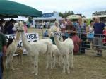 Oxfordshire & Thame Show -
