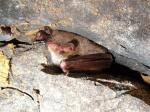 Natalie Todman, Lothian Bat Group -