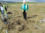Tree Planting at Sugden End - tree planting supervision